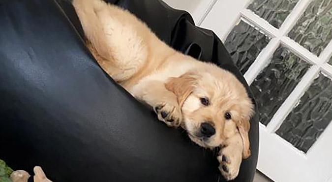 Puppy Adjustment